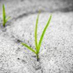 grass-1913167_1920_kl